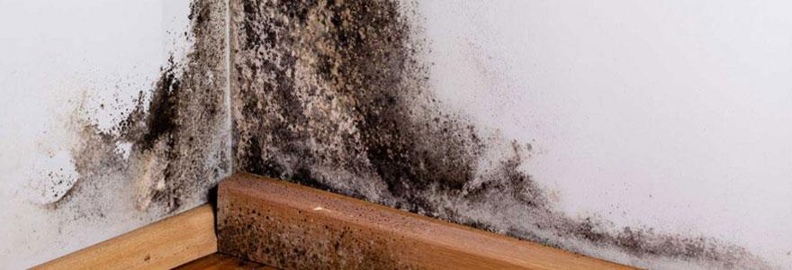 Traiter un problème de mur humide
